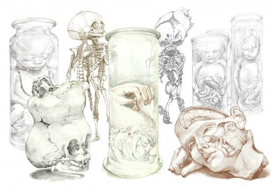 Anatomicalcollections